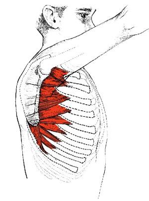 serratus anterior exercises at home